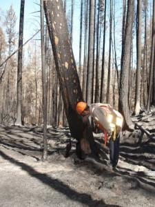 Pritchard Fire